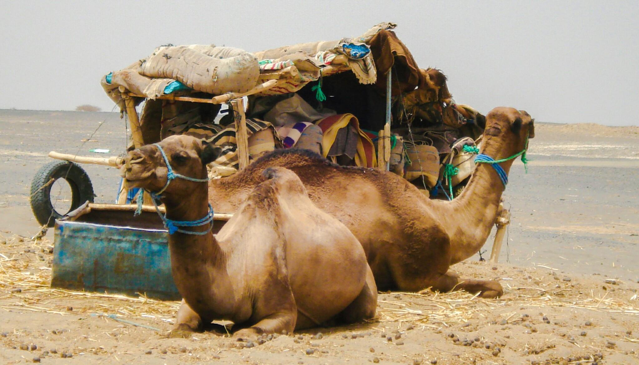 Cap d'any al Marroc, Soloraids